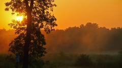 Sunrise (Bob's Digital Eye) Tags: 2017 bobsdigitaleye canon canonefs55250mmf456isstm flicker flickr laquintaessenza landscape morningmist silhouette sun sunrise t3i