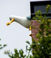 Mine! Mine! Mine! (SKS Photos) Tags: findingnemo pixar animation computer bird seagull building
