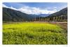 _DSC5582 (一方天地) Tags: 武陵農場 風景 戶外 outdoor landscape