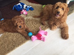 Ruby Red and Spanky's Ditto at home with her new sister Ruby
