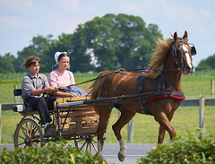 Cruising (Oculus animi index) Tags: amish buggy rural pennsylvania pa lancaster county