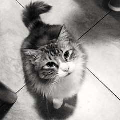 Gat (micaelagallialcazar) Tags: gato manchas felino bahia animal mirada ojos pelos