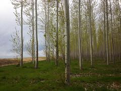 Boardman Forest (3 of 1) (M. Waller) Tags: 2017 april boardmanforest oregon biomass boardman unitedstates us