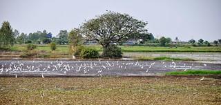 suphan buri - thailande 12