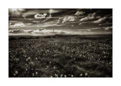 O24C1774 (keithcravenphotography) Tags: cotton grass stanage edge