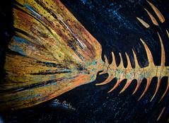 Silas (gngrsnp355) Tags: dunedinfl art mural local silas fishbone crosswalk