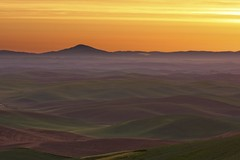 Dawn from Steptoe Butte (Alan Amati) Tags: amati alanamati america american usa us wa washington northwest nw pacificnorthwest palouse thepalouse steptoe steptoebutte colfax butte fields farms field sunrise dawn landscape mist hills rolling curvy curves dimpled earlymorning early earlylight firstlight predawn state park spring