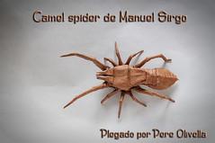 Camel Spider de Manuel Sirgo (Pere Olivella) Tags: insecte insecto insect artropodo invertebrado origami papiroflexia papeldo do manuelsirgo araña aranya spider aracnid aracnido
