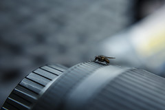 lens flier (clairescosmos) Tags: nikon macro d5200 fly lens photography upclose life insect nature detail bokeh texture filmstock sigma wildlife