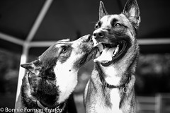 20170718_HARLEY DAVIDSON and FRIENDS_BFF_6704 (Bonnie Forman-Franco) Tags: dog dogpark dogphotographer dogphotography outdoors animals animalphotographer animalexercise animalphotography photography photographybywomen photoladybon pho