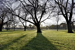 Frost on the grass (bobarcpics) Tags: darlinggardens park trees earlymorning frost cliftonhill barebranches shadows