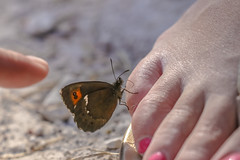 good things come to those that wait (I was blind now I see!) Tags: butterfly human landing sitting feet finger toes