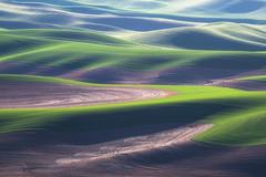 Lines and Undulations (jojo (imagesofdream)) Tags: washington palouse