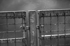 Regenwetter1 (Rene_1985) Tags: sony a7 ii mark2 zeiss 135mm amount 18 sonnar tele bw schwarz weis monochrom regenwetter rain gitter fence