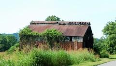 Old Barn in Henry County KY. (robgividenonyx) Tags: kentucky henrycounty barns abandoned ruraldecay rural