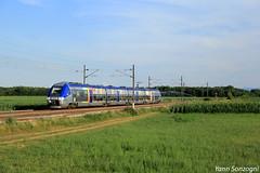 AGC arosé ! (Lion de Belfort) Tags: train chemin de fer champ maïs sncf ter alsace habsheim agc zgc z 27888 27500 ligne 4 l4