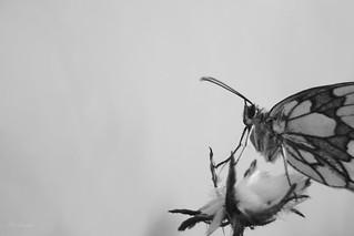 Noir et blanc 15729
