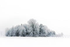 Snowy Forest (Brian 104) Tags: winter forest fields snow trees snowing digitalartblend