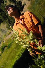 DSC_0511 (cintia scola) Tags: cíntiascola nikond300 summer2017 wildflowers