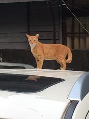 (未來風景) Tags: 亮眼 喵 猫 貓 meow neko ねこ cat 고양이