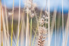 (seanlewis) Tags: arizona tontonationalforest bokeh
