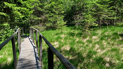 Moor (aniko e) Tags: trudnerhorn nationalparktrudnerhorn moor hochmooor wetland trail path weg forest altoadige südtirol altrei truden hiking outdoors italy italien nature