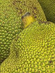Jack Fruit and Stem (cobalt123) Tags: asian leelee closeup food fruit gigantic green iphone6plus jackfruit unusual yellow pattern texture stem