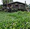 nonthaburi - koh kret - thailande 6 (La-Thailande-et-l-Asie) Tags: île rivière kohkret thailande nonthaburi
