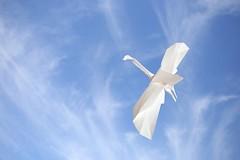 Anade en Vuelo - Choi Dong Gyu (Rui.Roda) Tags: origami papiroflexia papierfalten ave bird oiseau anade en vuelo choi dong gyu