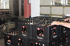 Crates full of goodies (Davydutchy) Tags: texel oudeschild eiland island insel île noordholland nederland netherlands niederlande paysbas texelse brouwerij brewery brauerei pivovar bier beer bière pivo cerveza beoir пиво biero bir øl μπύρα sör بيرة בִּירָה bottelarij bottling abfüllen fill crate krat kiste kasten bierkasten june 2017