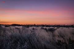 Uluru - Sunset-12