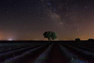 Vía Láctea y lavanda