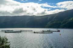 Boknafjorden, Norway
