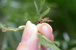 Fingertip Fly