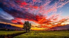 紅焰 Red (虎仔Hen) Tags: taiwan tokina tree taitung mountain morning nikon night nature cloud sky summer sunrise flame light red landscape paddy burn 台灣 台東 池上 伯朗大道 樹 稻田 山 天空 夏季 雲彩 火燒雲 早晨 晨曦 日出 戶外 風景 光影 尼康