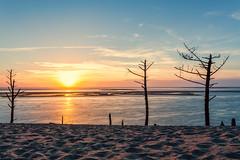 Dune du Pilat (Anthony Gehin) Tags: nouvelleaquitaine dune du pilat pyla sable arbre mort couchédesoleil sunset sand beach tree summer