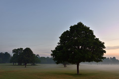 As the dawn mist fades to a memory (DESPITE STRAIGHT LINES) Tags: nikon d7200 nikond7200 nikkor1024mm nikon1024mm getty gettyimages gettyimagesesp despitestraightlinesatgettyimages paulwilliams paulwilliamsatgettyimages tree trees wood woods woodlands footscraymeadows kent bexley england uk tranquil tranquility serene serenity calm peace peaceful morning am firstlight light sunlight thegoldenhour goldenhour magichour themagichour mist misty morningmist mistysunrise forest silhouette sunrise sun ethereal