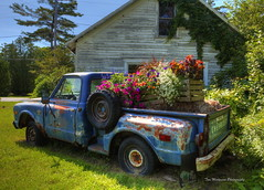 Gus Klenke's Garage and Flower Bed (Tom Mortenson) Tags: chevytruck wisconsin midwest rusty junker chevroletpickup ellisonbay flowerbed geotagged usa doorcounty colorful flowers plants doorcountywisconsin vehicle truck pickup ellisonbaywisconsin garrettbayroad highway42 gusklenkesgarage floral abandonedgarage 1740l