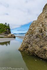 NT3.0094-ONP170701_67616 (LDELD) Tags: olympicnationalpark rubybeach washington ocean beach summer pacific rock seastack tidepool seaanemone
