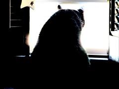 morning world (Lana Pahl / Country Star Photography) Tags: doorsandwindowsproject theartofwindows windowwednesday catsandwindows