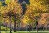 _DSC6748 (一方天地) Tags: 武陵農場 風景 戶外 outdoor