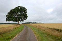 Alone (sgreen757) Tags: lone tree country lane road chavenage a46 glos gloucestershire nikon d7000 countryside rural farm land farmland crop field grey clouds sky