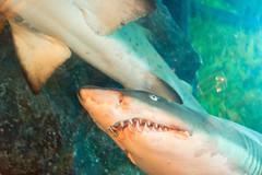 Sharks (tesKing (Italy)) Tags: abudhabi aquarium dubai dubaimall emiratiarabi uae emiratiarabiuniti ae