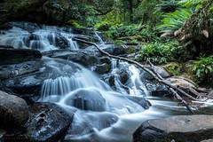 Erskine Waterfalls (Samuel Gmehlin) Tags: waterfall erskine australia greatoceanroad silky melbourne 墨爾本 澳大利亞 澳洲 瀑布 大洋路