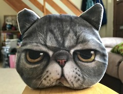 Grumpy face (dksesh) Tags: dhanakoti appleiphone7 iphone7 seshadri harita appleiphone sesh seshfamily haritasya hevilambisamvatsara apple iphone cat purse