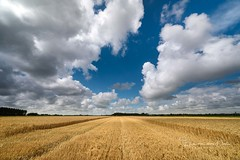 Dutch summer (Ellen van den Doel) Tags: tarwe natuur netherlands juli graan nederland grain dutch clouds 12mm polder summer 2017 outdoor landschap nature veld zomer wheat sky lucht laowa landscape wolken field