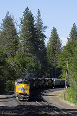 In the pines (Patrick Dirden) Tags: up8750 sd70ace emd electromotivedivision electromotive diesel locomotive engine rail railroad train freighttrain freight cargo up unionpacific unionpacificrailroad uprosevillesub goldrun goldrunca placercounty goldcountry sierranevada sierra mountains northerncalifornia california
