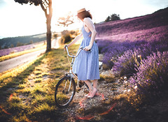 On the road to the garden (Siréliss) Tags: siréliss summer light bike woman lavender été vélo