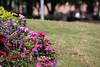 Visit to Discovery Green (Houston, Texas - July 19, 2017) (cseeman) Tags: discoverygreen park discoverygreenpark urbanpark publicpark flowers gardens nature houston texas houstonparks houston2017 monumentaufantome jeandubuffet art publicart houstonart