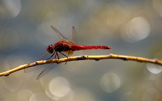Dragonfly in the dance hall